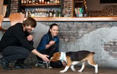 This Dublin bar will let your dog sit with you while you have a glass of wine