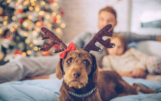 We love our fur babies! 8 Christmas gifts for your pet (with prices from €3.50)