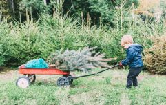 The Grangegorman Bring Centre will recycle your Christmas tree for free