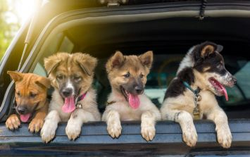 Animal lovers rejoice! A pet festival is coming to Dublin next month