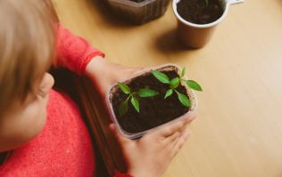 Earth Day: 3 easy nature-inspired projects to get the kids involved in