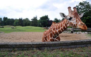 Award-winning filmmaker Carlos Carvalho has died after being attacked by giraffe on set