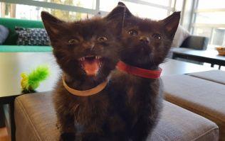 Dublin's cat café has announced that it is closing next month