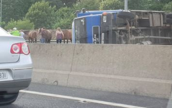 The M50 southbound is closed as a truck carrying several horses overturns