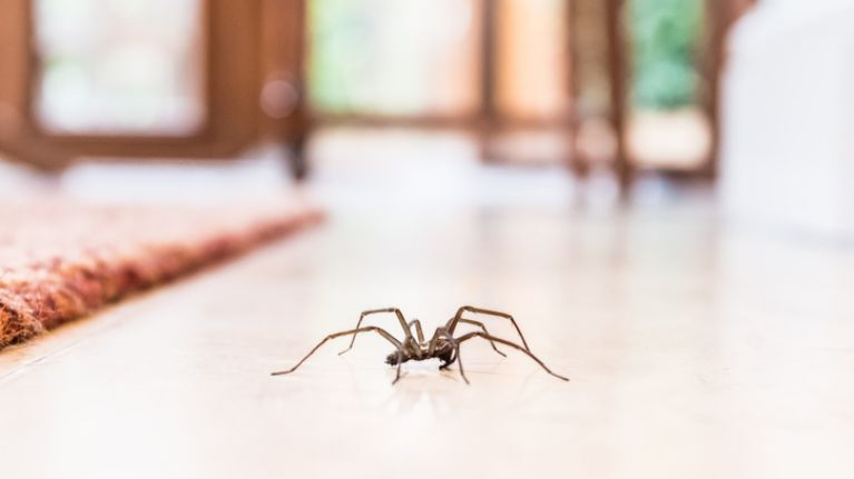 This is how to stop spiders ever getting inside your house again