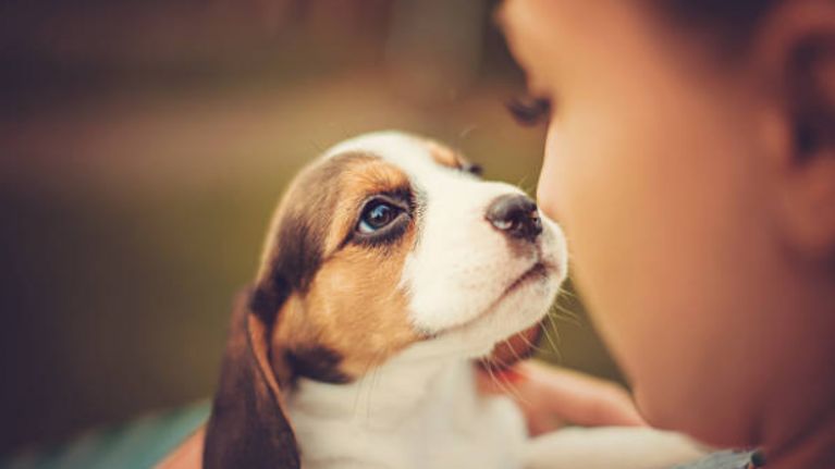 Have a puppy? Dogs Trust is looking for participants to take part in a study