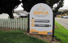 The DSPCA is looking for information after a dog was abandoned on the M50