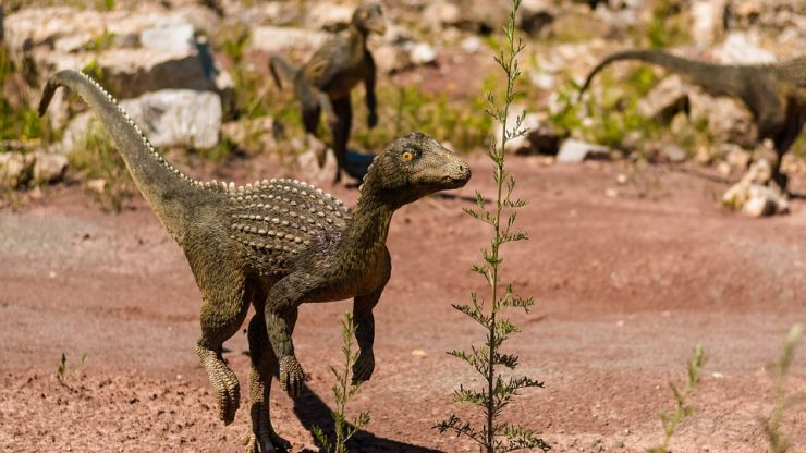 You can meet mini dinosaurs in Dublin city centre this Friday
