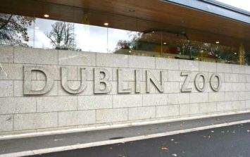Dublin Zoo announce half priced tickets for the next four weekends