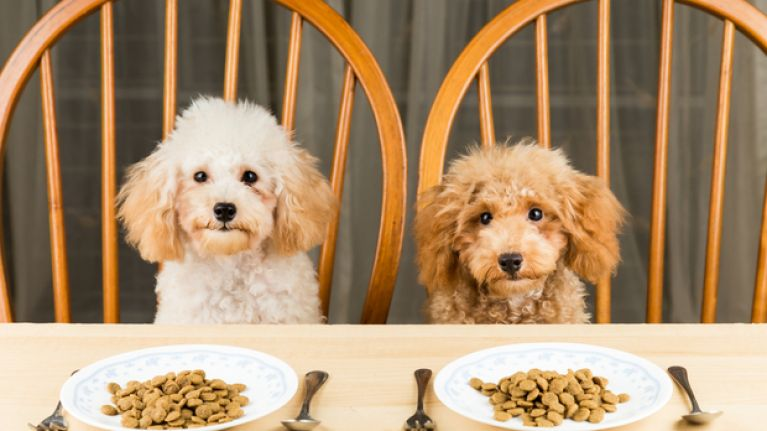 One third of pet owners say their furry friends are their 'favourite child'