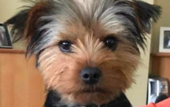 Heartbroken man appeals for help to find his dog who went missing in Dublin park