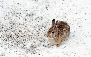Dublin Airport police share video of them rescuing baby rabbit in the snow