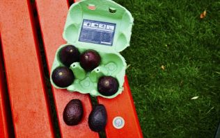 Tesco now stocks mini 'snack-sized' avocados and we're hugely intrigued