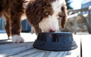 New study finds deadly bacteria in dog bowls puts both animals and owners at risk