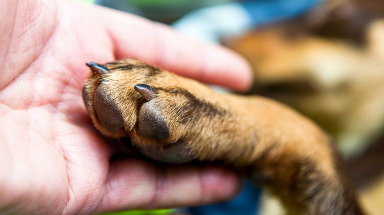 Psychologists say that we need to be more understanding when people lose a pet