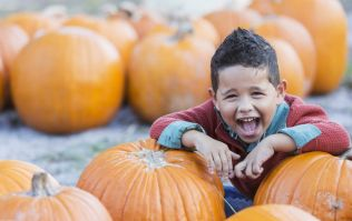 GIANT pumpkins are coming to Dublin and this is where you can see them