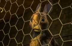 Watership Down is getting remade and the first images look incredible