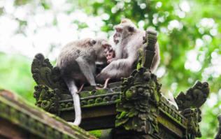12-day-old baby boy killed by monkey in India