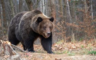 Woman and 10-month-old baby girl killed by grizzly bear in Canada