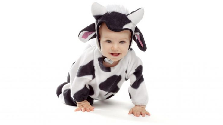 Video of little boy saying 'moo' in Welsh and Irish accents is just too adorable