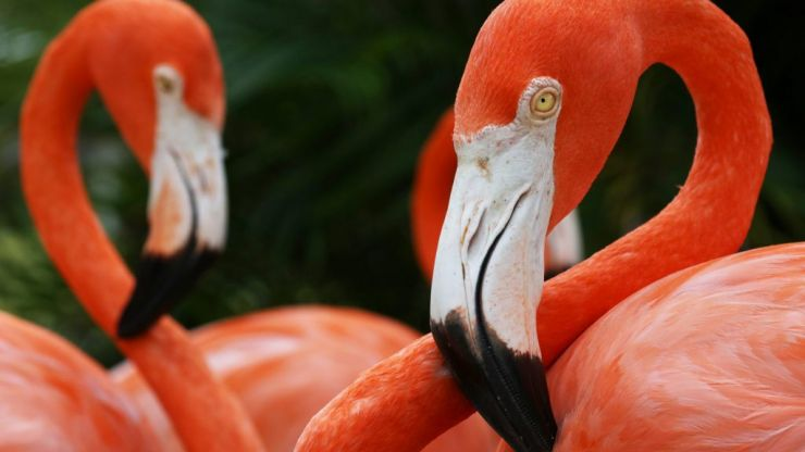 Flamingo in zoo has to be put down after child throws rock at it