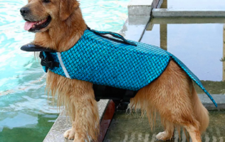 You can now get a mermaid life jacket for your dog and we'll take seven