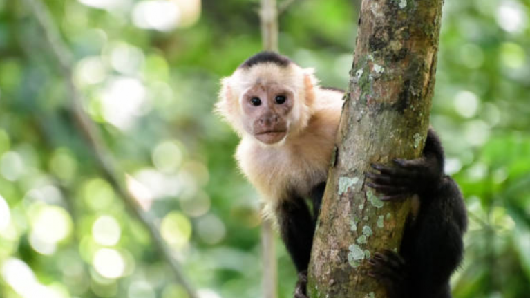 Mother admits she wants a pet monkey, and everyone thinks it's ludicrous