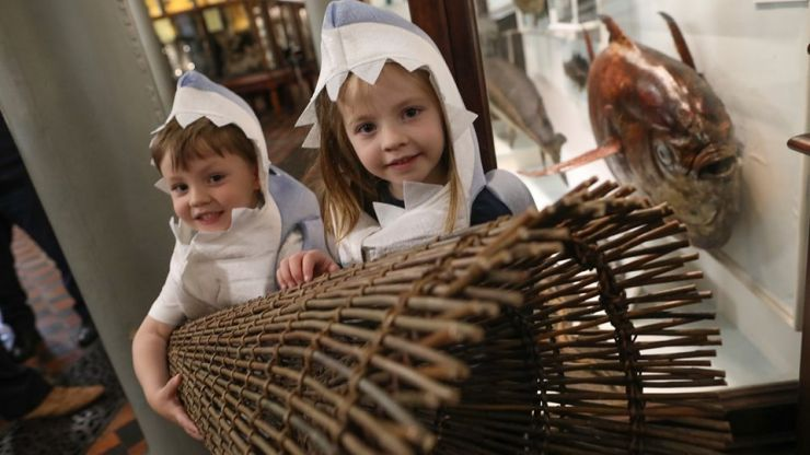 There's lots of Fishy Fun to be had at the National Museum of Ireland this week