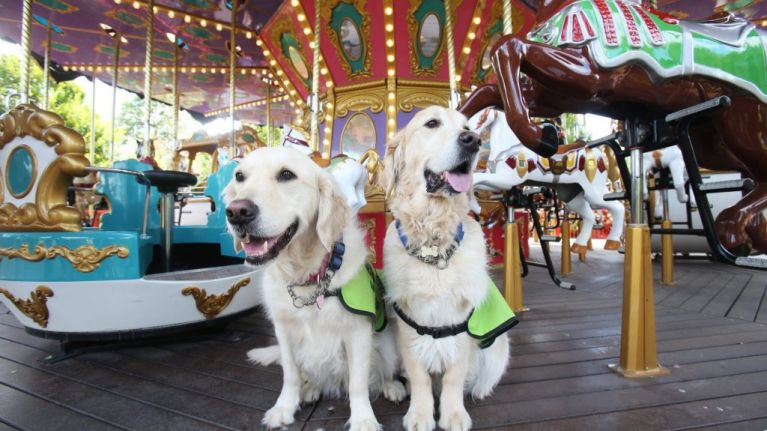 Tayto Park visitors invited to try sensory tunnel for Irish Guide Dogs event