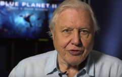 BBC announce David Attenborough has two nature documentaries coming this year