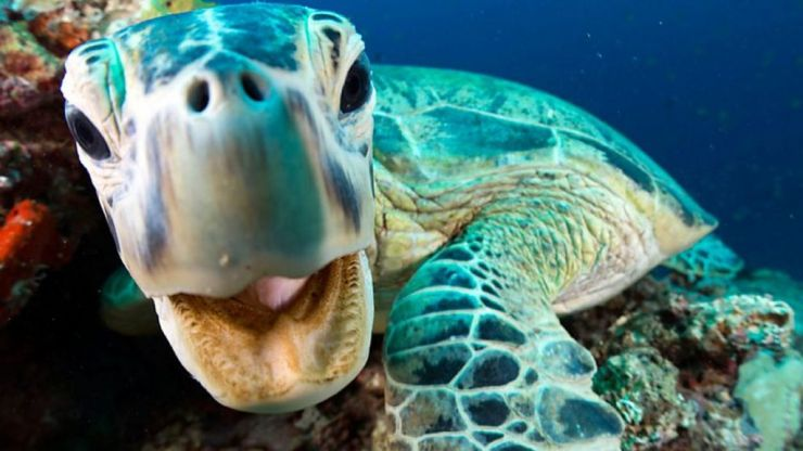 The trailer for Blue Planet Live looks to be one of the best ones yet
