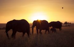 How to travel South Africa with the kids and make for a magical experience
