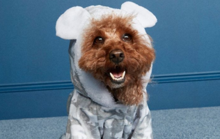 You need to see Penneys' adorable new dog jammies that are only €8