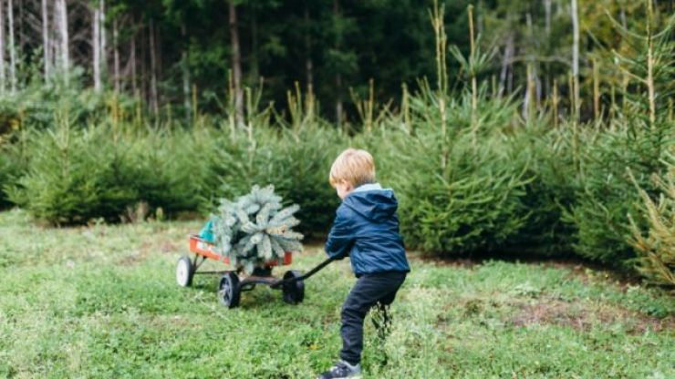 The ugly truth behind your plastic Christmas tree might make you swap it for a real one this year