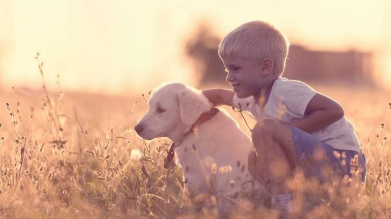 Seven-year-old boy wins award after rescuing more than a thousand dogs