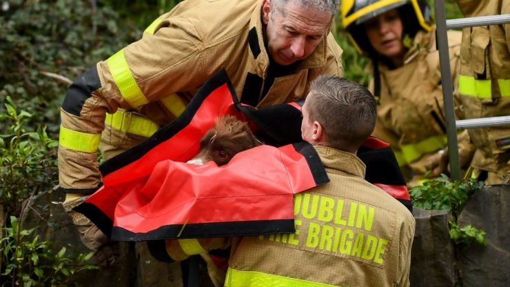 Firefighters from Phibsborough station rescue dog from a cliff