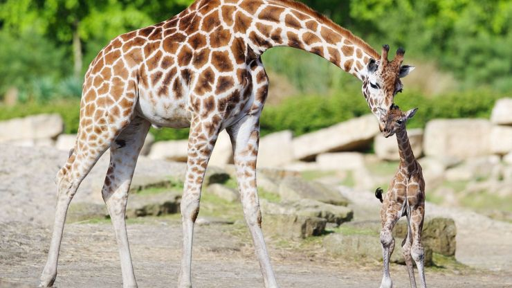 Dublin Zoo to reinvent itself with ambitious new plan
