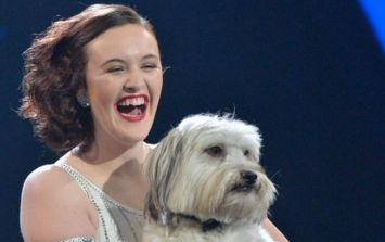Tragic: Britain's Got Talent star Pudsey the dog has to be put down