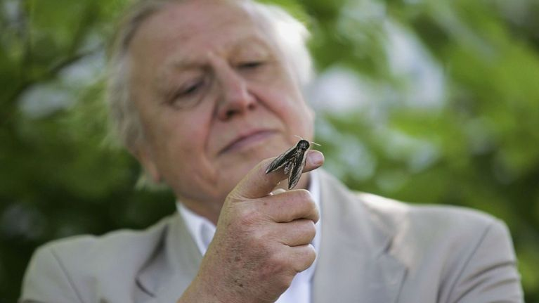 BBC commission three new nature series with David Attenborough