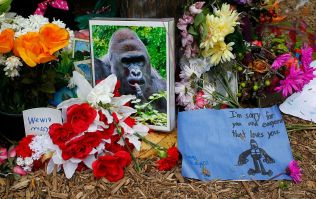 Today is the one year anniversary of Harambe's death, so here's a look back at the history of Harambe memes