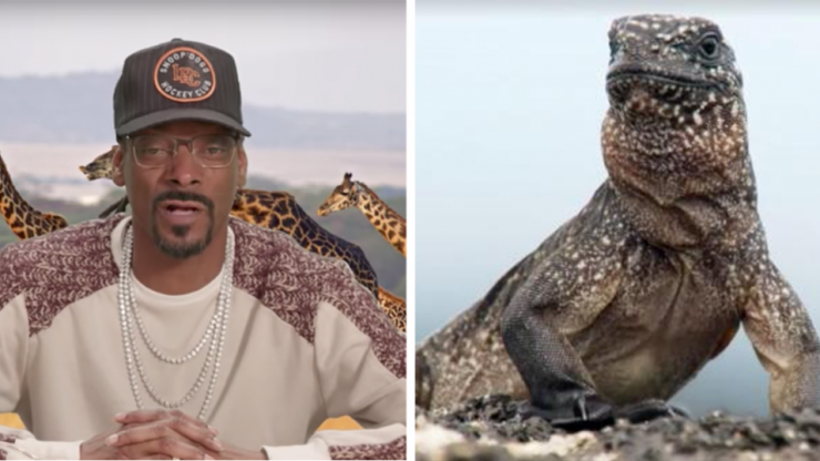 Snoop Dogg narrating Planet Earth II's 'Iguana vs Snakes' makes it even better
