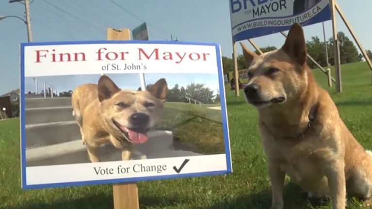 A dog is running for mayor in a Canadian city