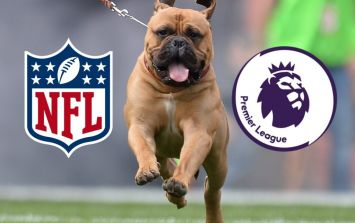 What dog mascots should each Premier League team have? A definitive list...