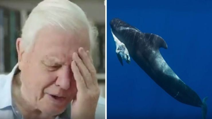 Blue Planet II absolutely broke the nation's heart with one harrowing but important scene