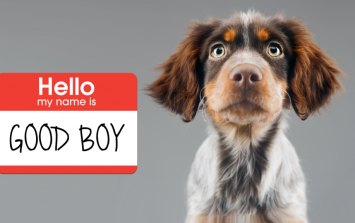 Quiz: Can you guess these dogs' names just by looking at them?