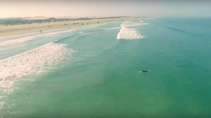 Drone captures surfers' close encounter with shark