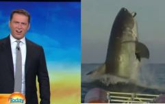 Australian news reporter's hilarious reaction to this huge shark is priceless (Video)