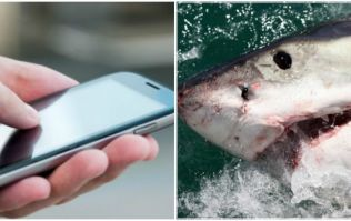 This incredible iPhone app could save you from a shark attack