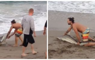 VIDEO: Man pulls struggling shark from the water to pose for photos