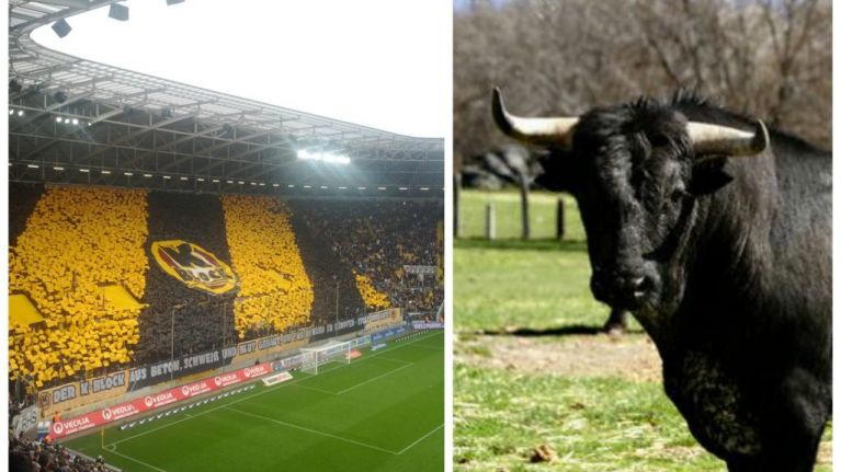 Dynamo Dresden fans use severed bull's head in protest against rivals